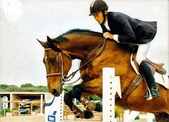 pension et dressage de chevaux