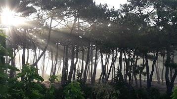 Le Lodge du Cap Ferret